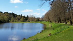 Image of park with large pond